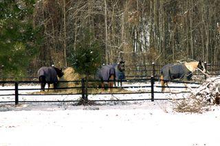 Neighbor horses_sm