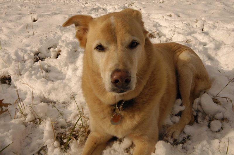 Buddy snow2_sm