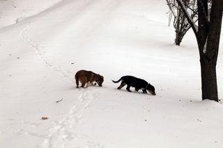 Pups snow_sm