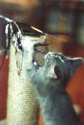 Monterey kitten