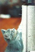 Monterey kitten2